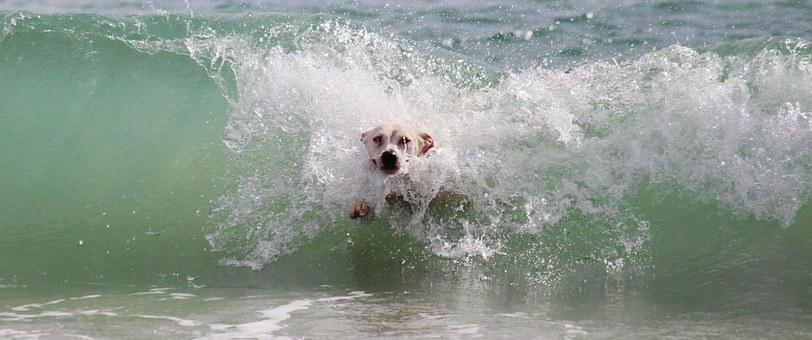 初めてサーフィンに連れて行ってもらう時に必要な持ち物と心構え