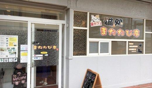 八戸市の猫カフェ「猫処またたび亭」に行ってきた:写真レポ、飲み物や楽しみ方をブログで紹介したい