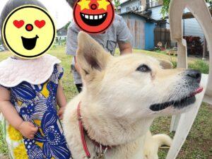 GoProで撮った犬
